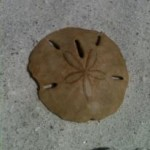 A sand dollar for your thoughts