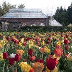 tulips_conservatory