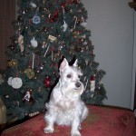 Lucy_Christmas