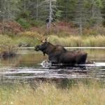National Wildlife Refuges: Living on the wild side (USAToday.com, Oct. 1, 2014)