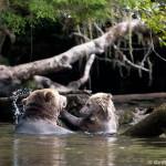 Getting Wild on North Vancouver Island – Bears! (GirlsGetaway.com, January 2014)