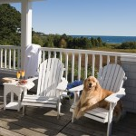 Love Your Pet Day: 4 Hotels Across the U.S. to Pamper Your Pooch (AOL Travel, February 2014)