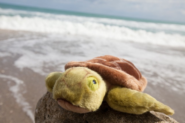 Loggy the Turtle from the Jupiter Beach Resort & Spa