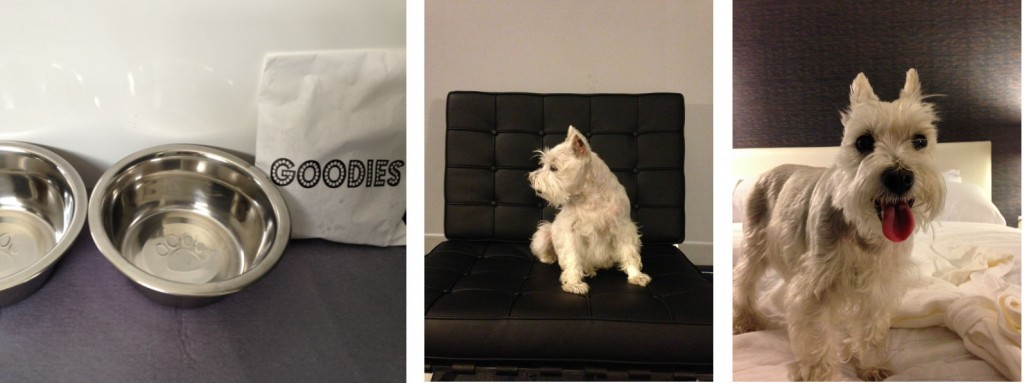 Lucy made herself right at home at Le Méridien Tampa!