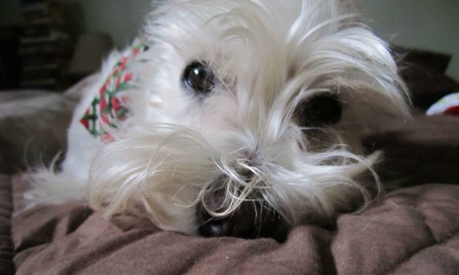 Celebrate National Dog Day!