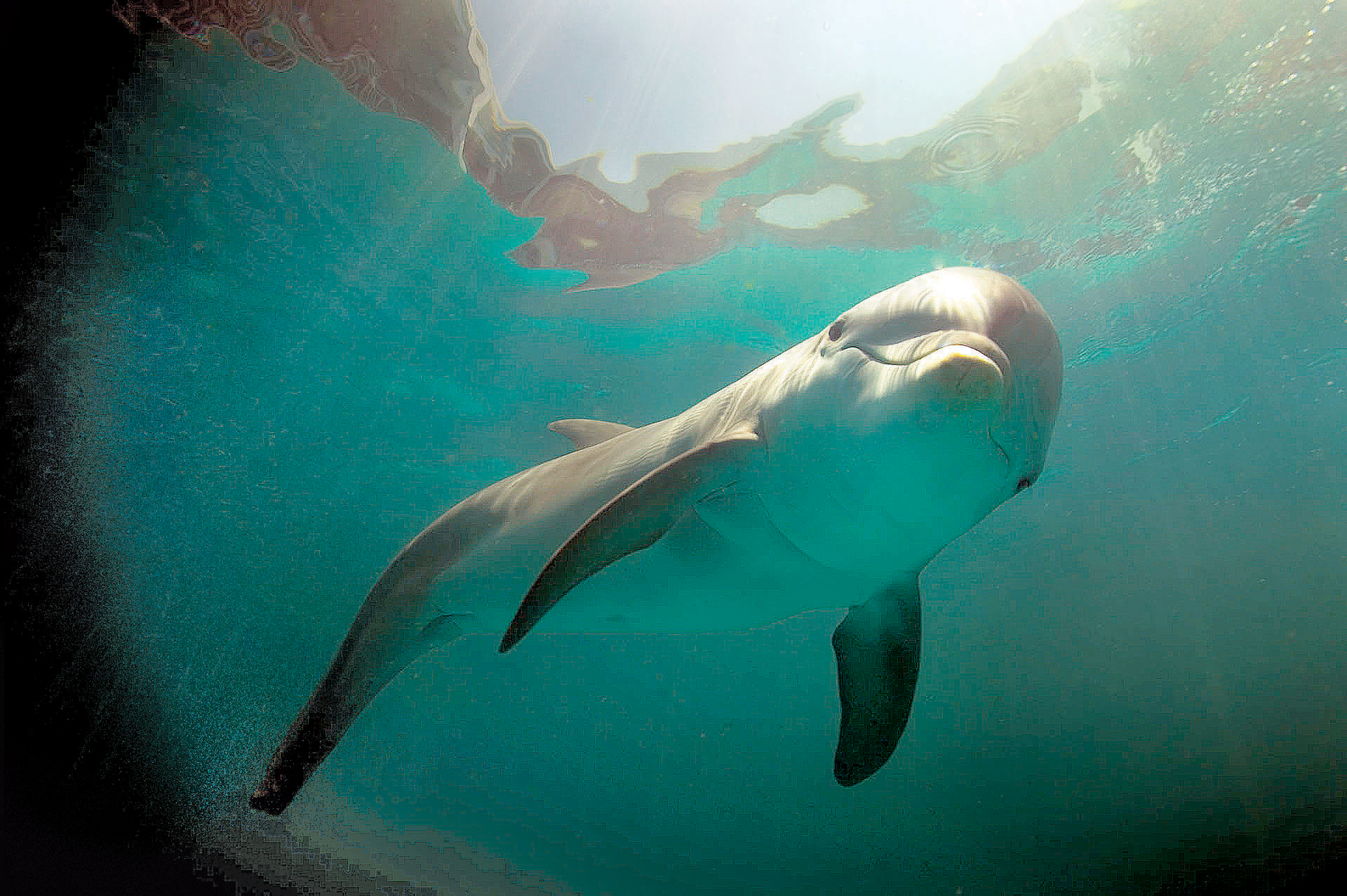 My Time with Winter the Dolphin