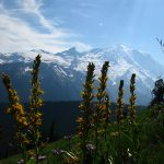 Mount Rainier National Park: 10 tips for visiting the park (USAToday.com, April 2016)